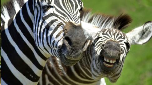 笑わずにはいられない!愉快な動物たちの、ちょっと変わった「歌」と「声」!